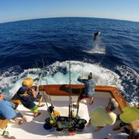 sport-fishing-2